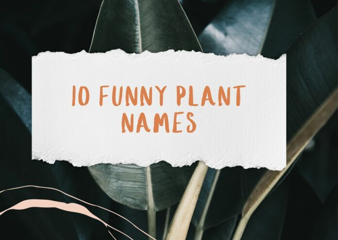 10 Funny Plant Names