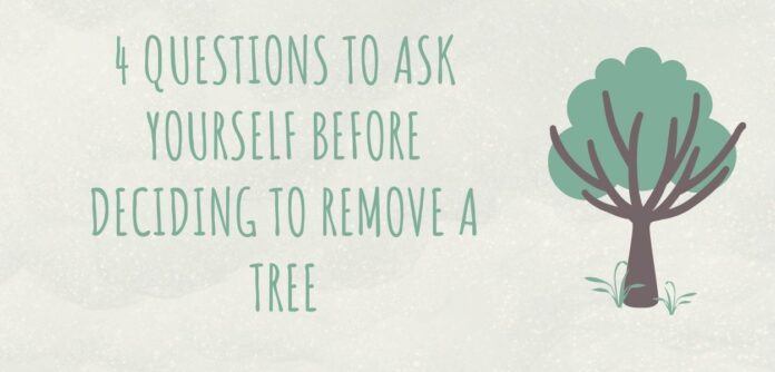 4 Questions to Ask Yourself Before Deciding to Remove a Tree
