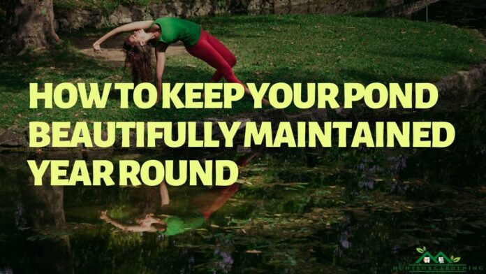 How To Keep Your Pond Beautifully Maintained Year Round