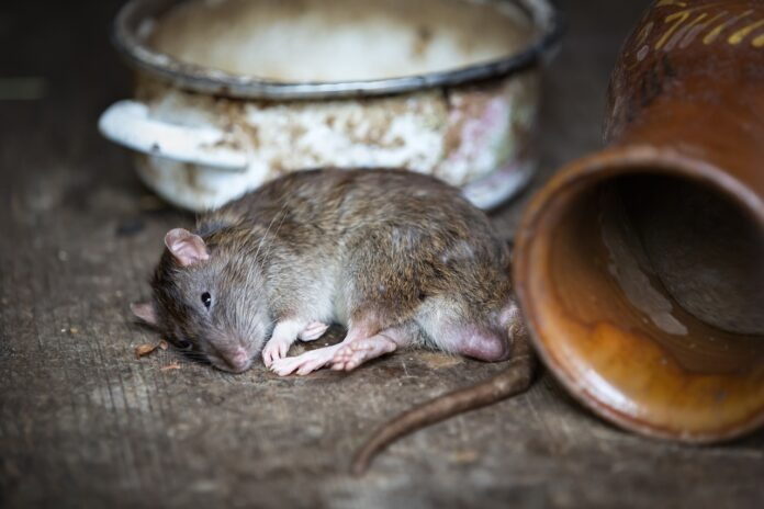 Choosing The Right Pest Control Services