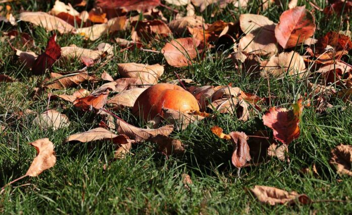 Gardening Tips For The Winter Months