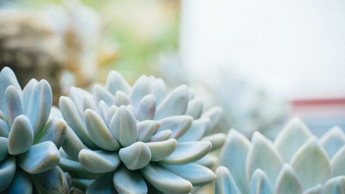 Heat Loving Plants For Hot Climates