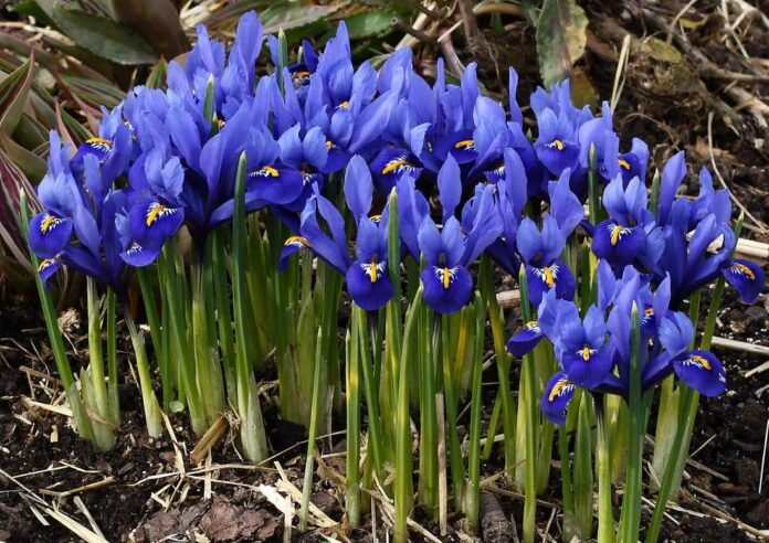 Plants with February Flowers