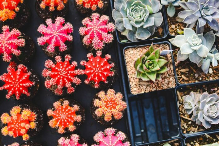 Decorate Your Home and Garden with Easy to Grow Succulents
