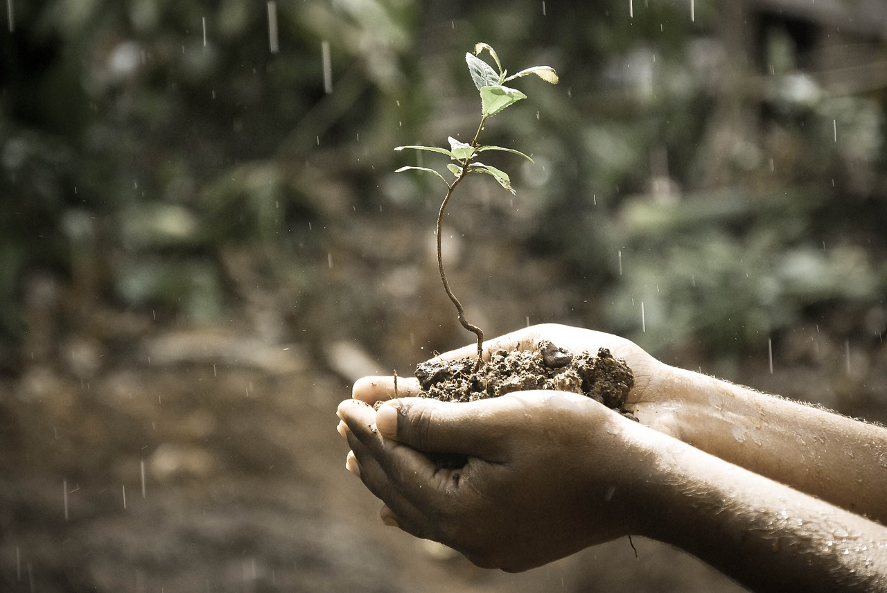The Best Soil pH Testers Review and Buying Guide 2018