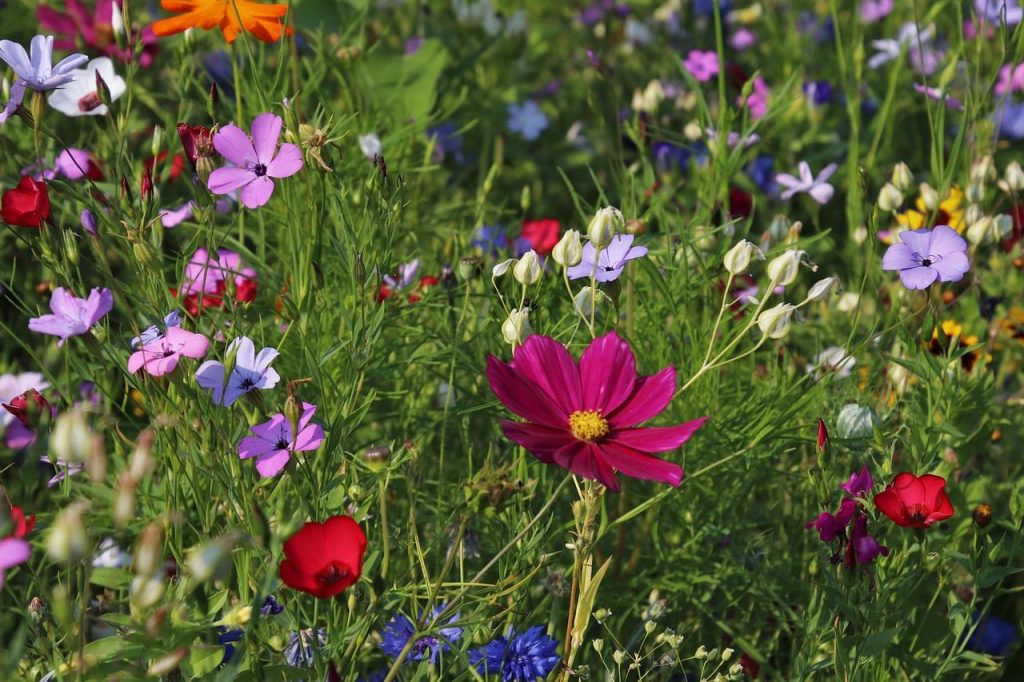 Wildflowers for Spring Bloom