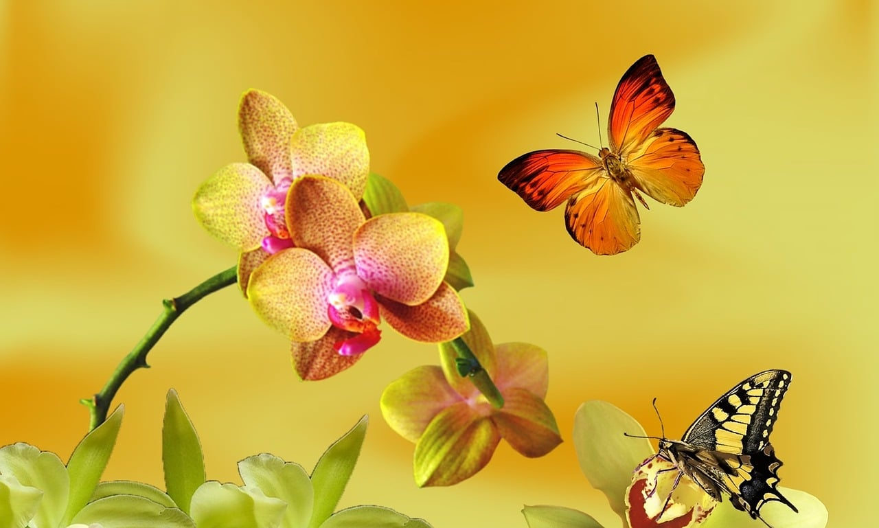 The Butterfly Orchid is an Elegant Houseplant