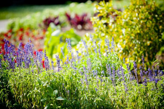 Two Native Spring Plants for a Bee Garden