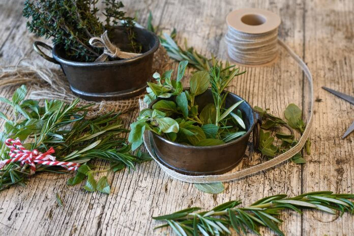 Plants in Your Herb Garden: Rosemary