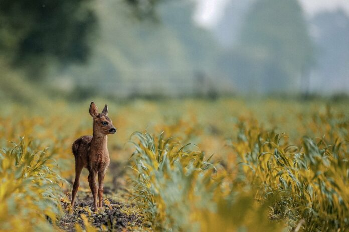 How to Protect Your Garden from Deer