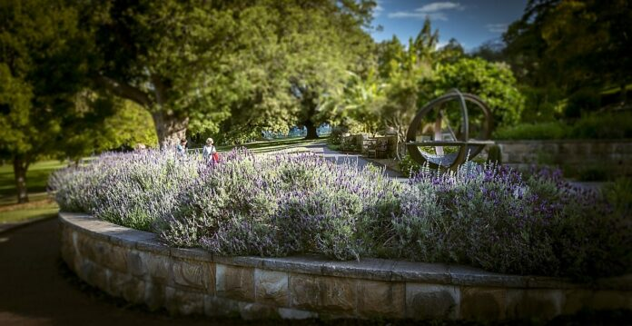 How to Plant an Apothecary Garden: History, Herbs and Decorations