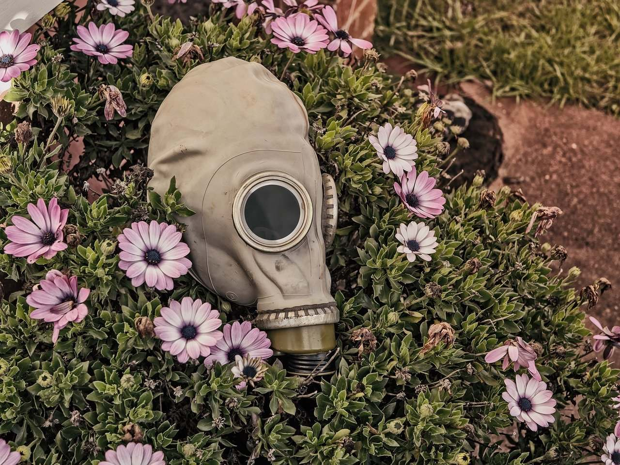 Gardening and Coping with Allergies