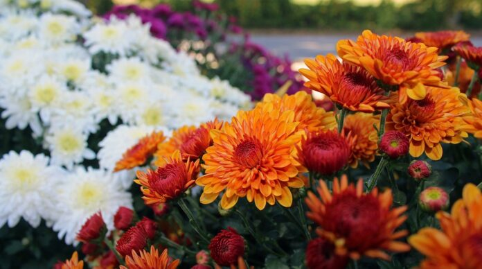 How to Create a Colorful Fall Garden