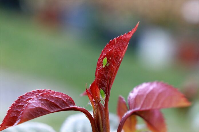 Pest Control Products for Indoor Gardening