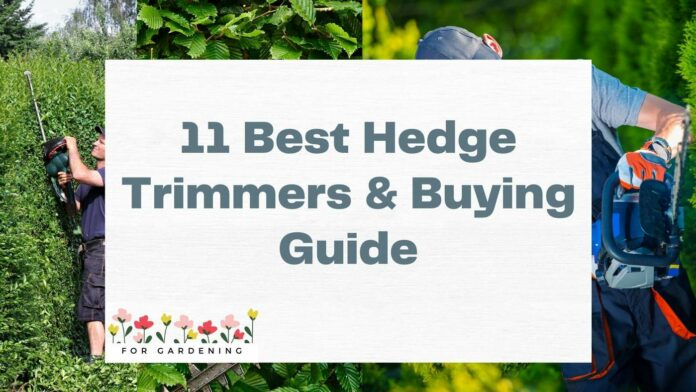11 Best Hedge Trimmers & Buying Guide