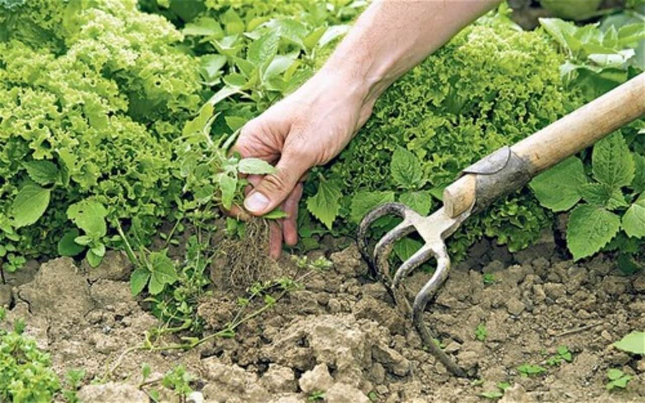 controlling weeds