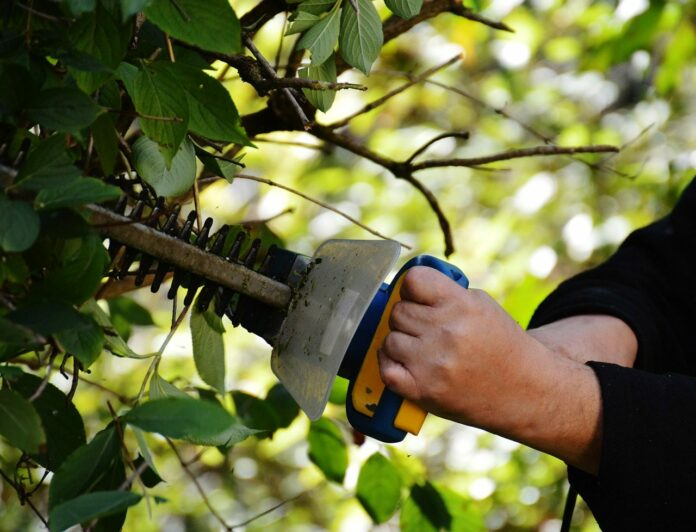 11 Best Hedge Trimmer Reviews [2021 EDITION]
