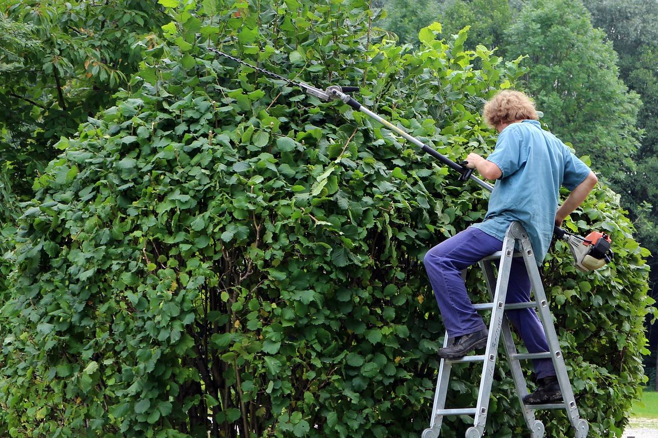 Important features to Consider before Choosing a Hedge trimmer
