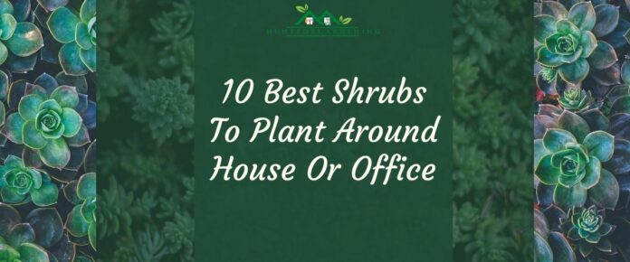 10 Best Shrubs To Plant Around House Or Office