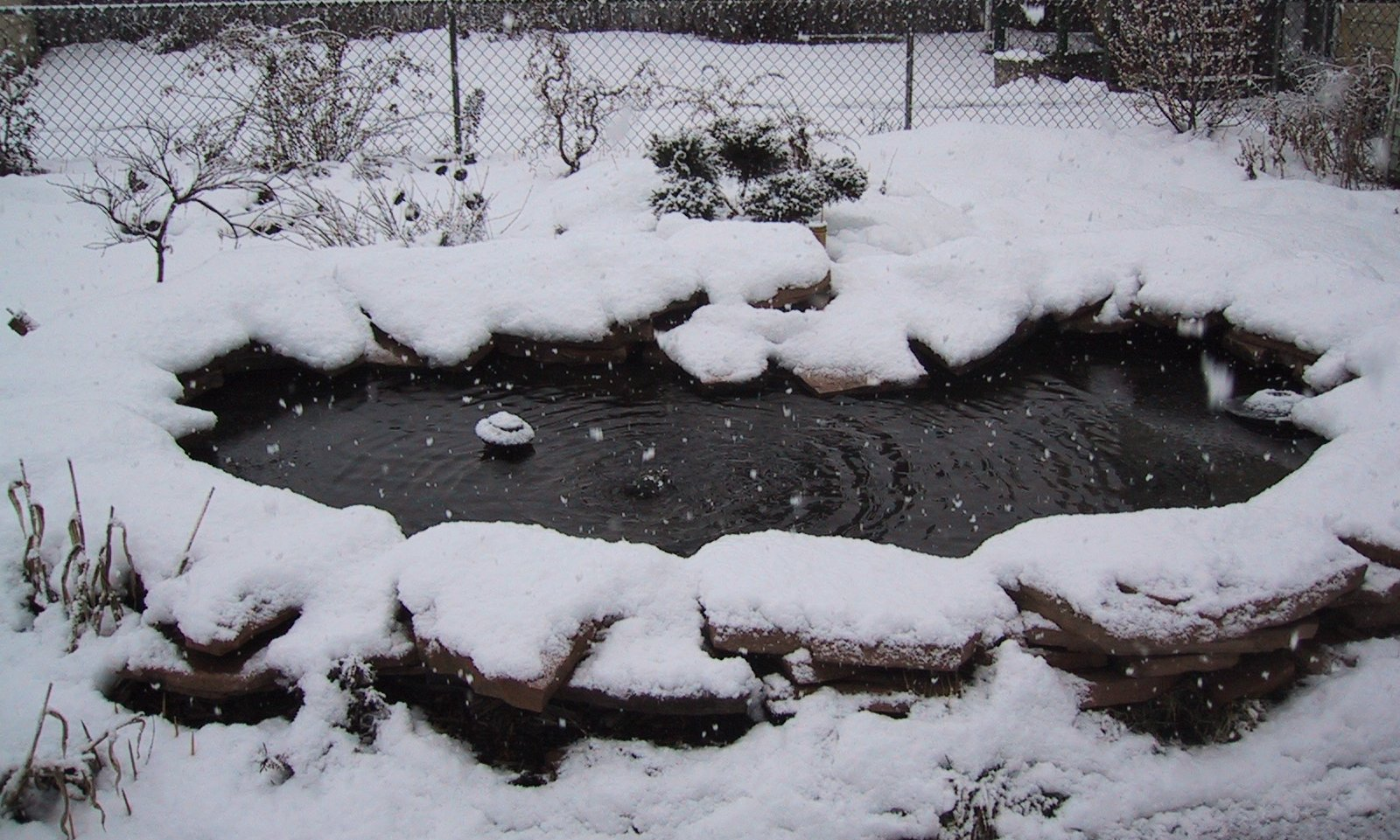 Pond winter times care