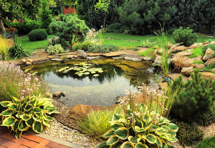 Sit Back and Enjoy your Pond