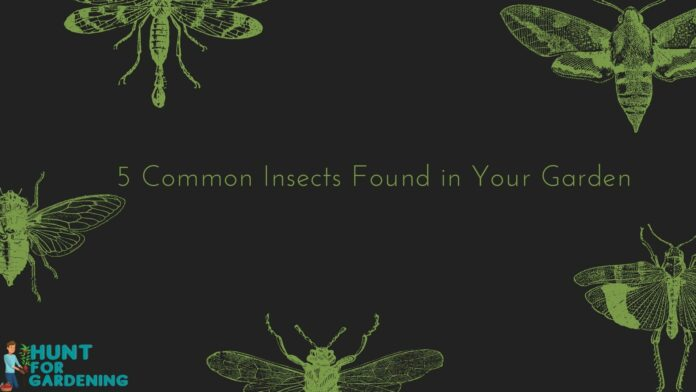 5 Common Insects Found in Your Garden