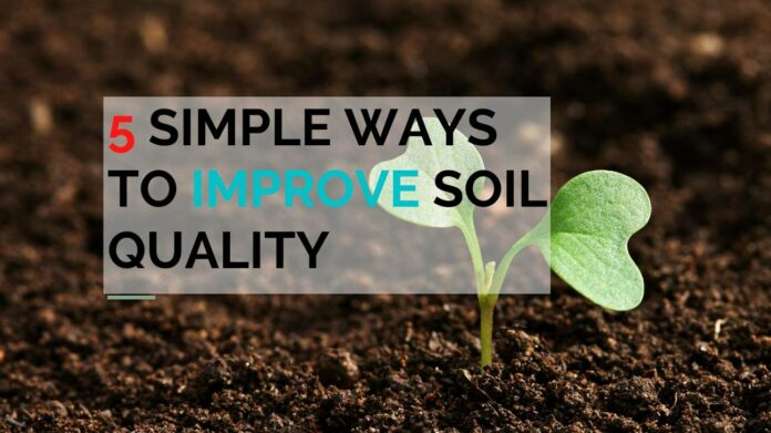 Five Simple Ways to Improve Soil Quality