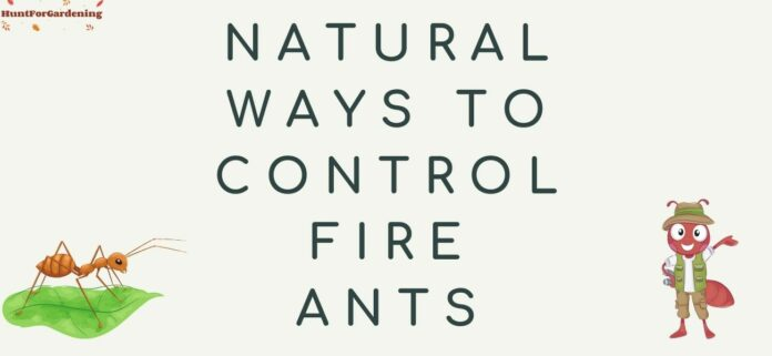 Natural Ways to Control Fire Ants