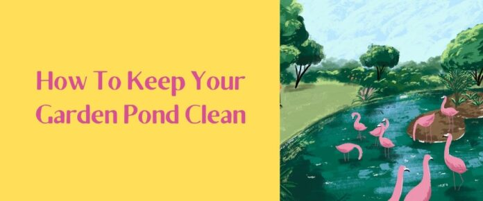 How To Keep Your Garden Pond Clean