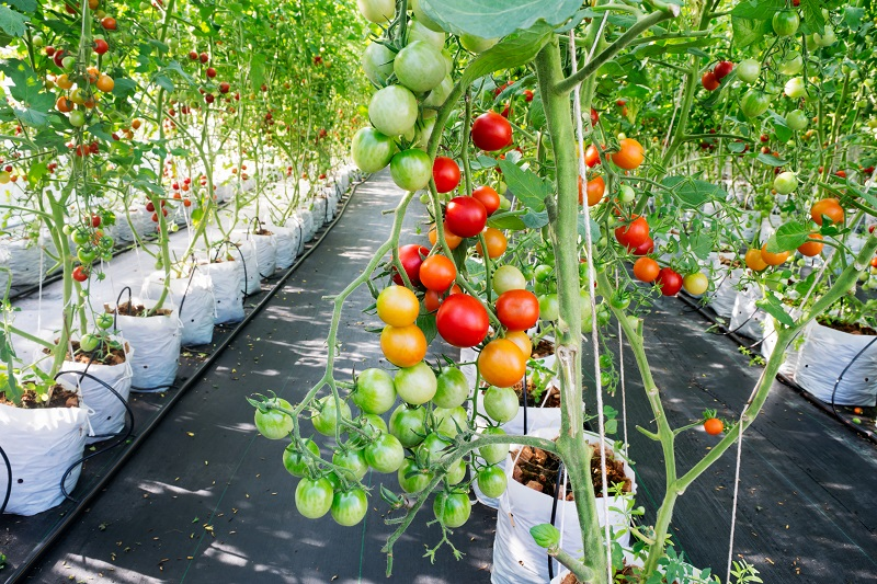 What Are the Top Plant Nutrients Essential for Growth of Plants?