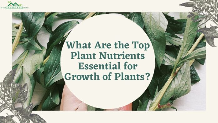What Are the Top Plant Nutrients Essential for Growth of Plants