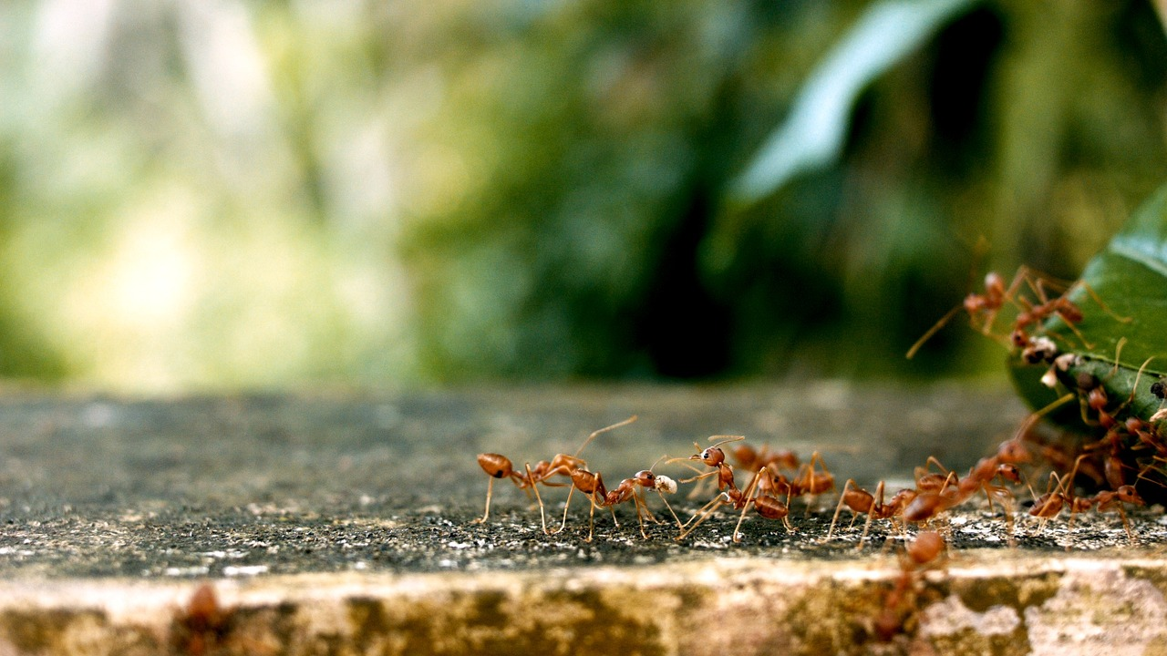 Natural Ways to Control Pests Like the Fire Ants