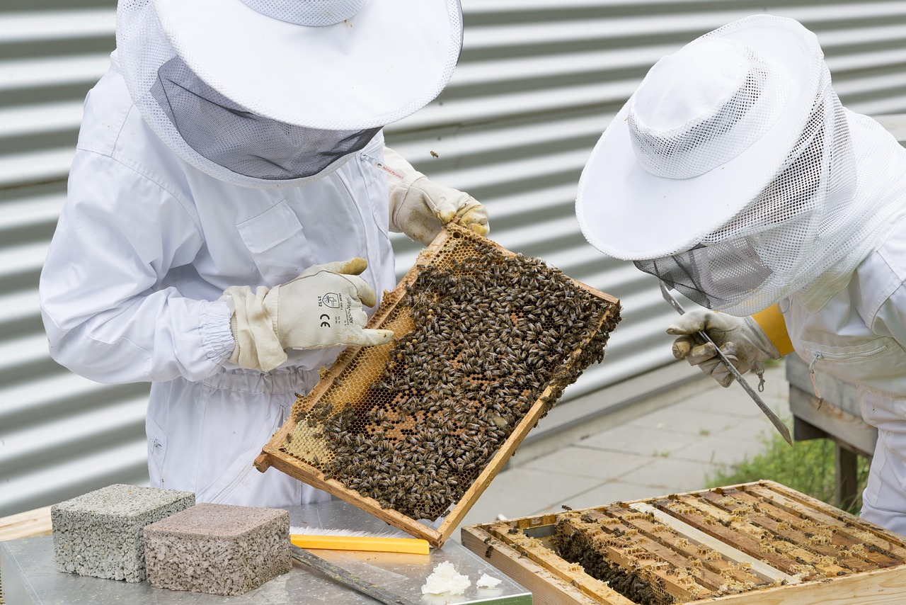 Starting a Hive? Consider These Tips for Easy Home Beekeeping