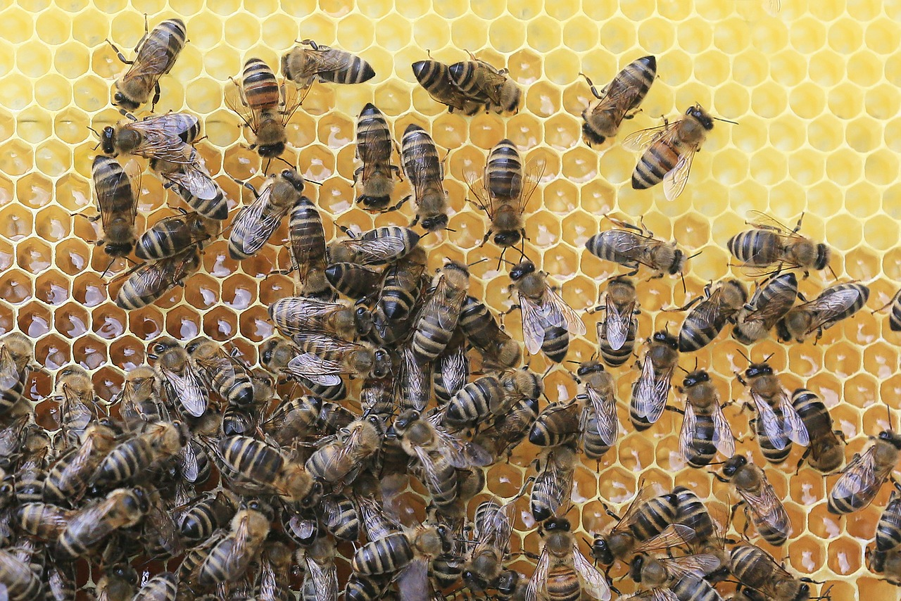 Bee Protection | Learn How to Keep Bees at Home