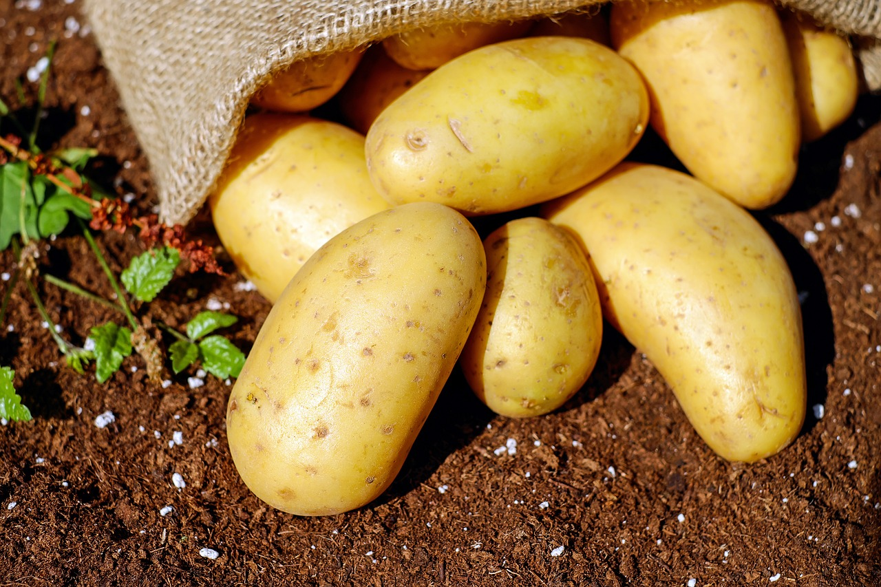 potatoes for survival