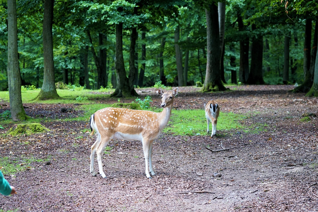 6 Tips to Help You Repel Deer from Your Garden All Year