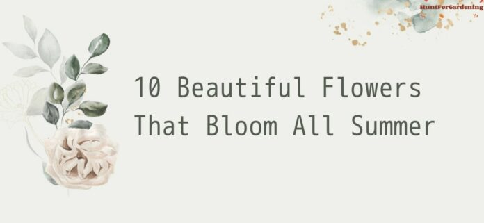10 Beautiful Flowers That Bloom All Summer