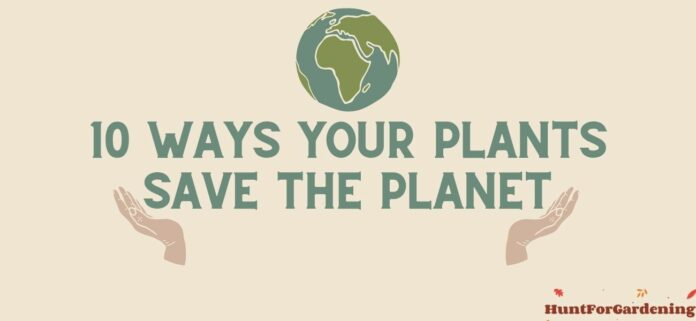 10 Ways Your Plants Save the Planet