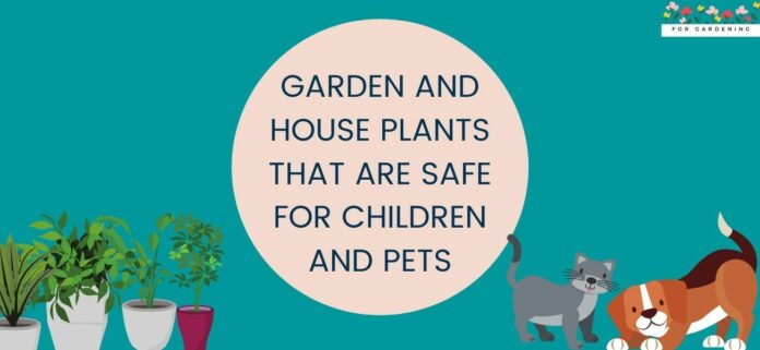 Garden and House Plants That Are Safe for Children And Pets