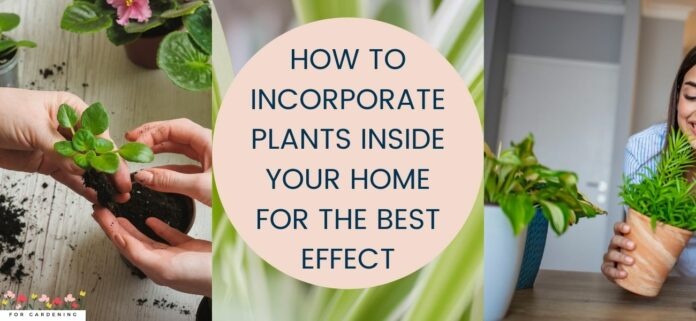 How To Incorporate Plants Inside Your Home For The Best Effect