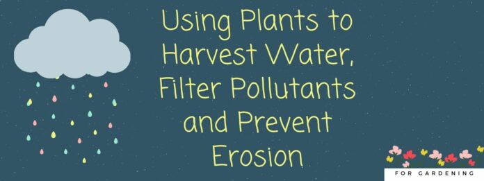 Using Plants to Harvest Water, Filter Pollutants and Prevent Erosion