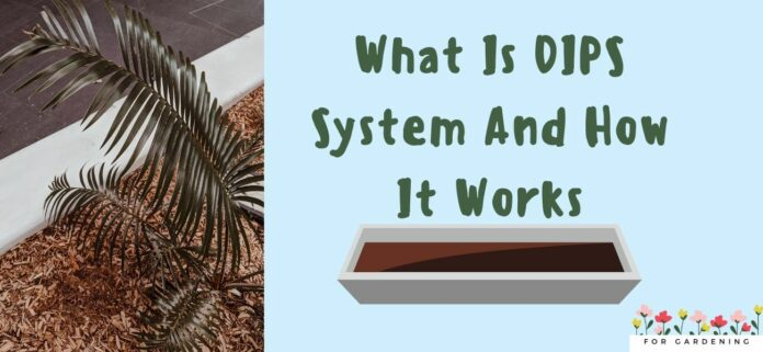 What Is Dips System And How It Works