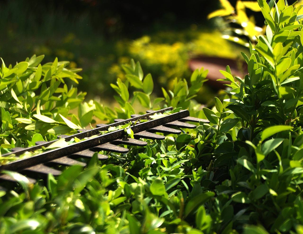 Buyer's Guide for Best Hedge Trimmer