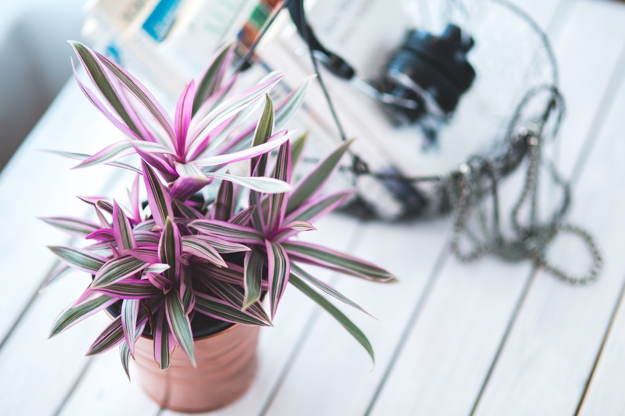 Remember: Maintenance Is Key for indoor plants