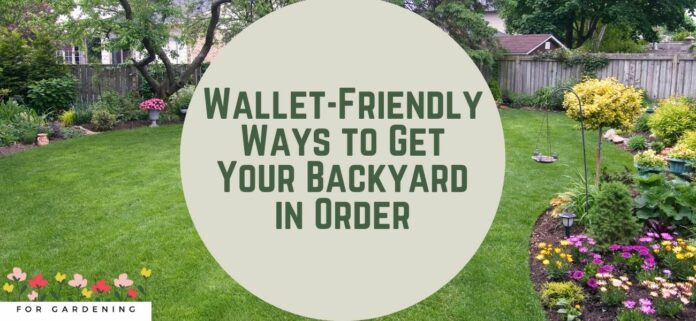 Wallet-Friendly Ways to Get Your Backyard in Order